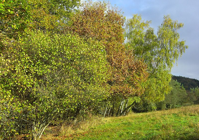 Wald und Wiese im Regen an der Traumschleife Kupfer-Jaspis-Pfad