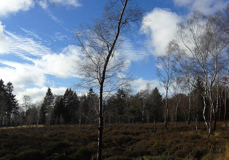 Hier steht ein Bild mit dem Titel: Wald im Wald – leider überbelichtet (Foto: H.-J. Schneider)