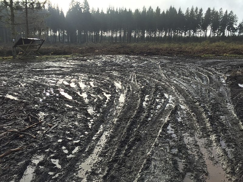 Wanderführer Nordeifel: Durch industrielle Abholzung rücksichtlos geschundene Natur im Naturschutzgebiet Hohes Venn (Foto: Hans-Joachim Schneider)