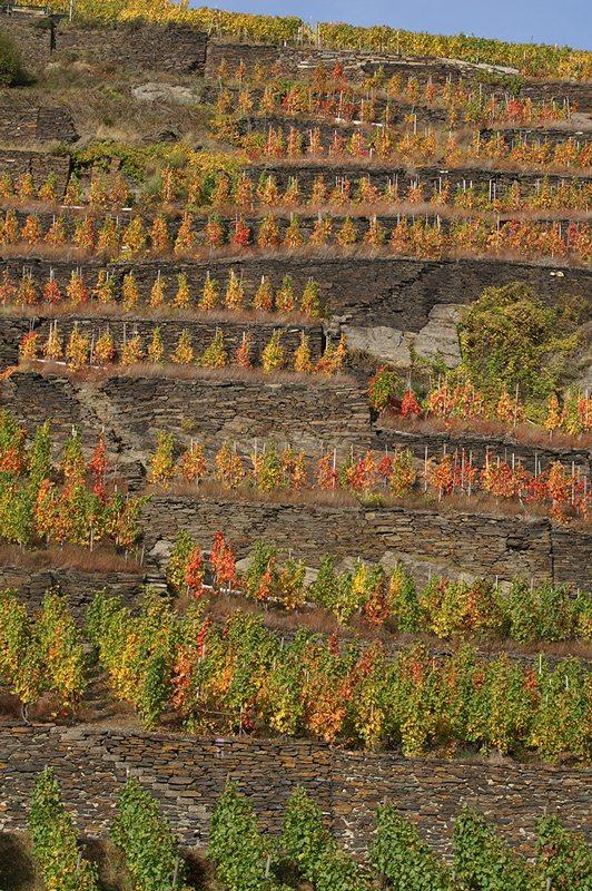 Rotwein von der Ahr: Wer auf dem Bahnsteig noch warten muss, kann im Herbst diesen Blick genießen (Foto: Hans-Joachim Schneider)