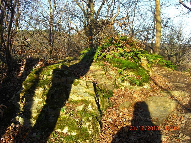 Hier steht ein Bild mit dem Titel: Große Menschen werfen große Schatten, große Bäume noch viel mehr (Foto: Hans-Joachim Schneider)