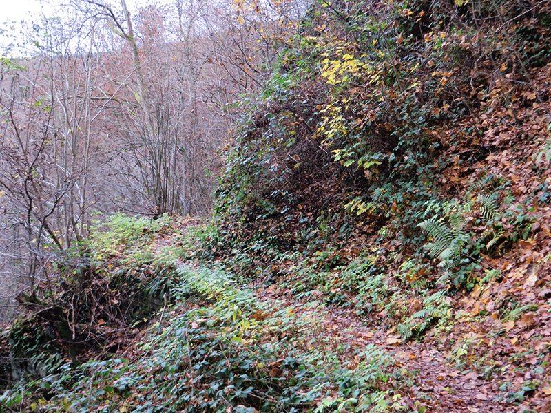 Steig, Herbstlaub, schmaler Weg: Ja, das verspricht ein wenig Abwechlsung (Foto: Hans-Joachim Schneider)