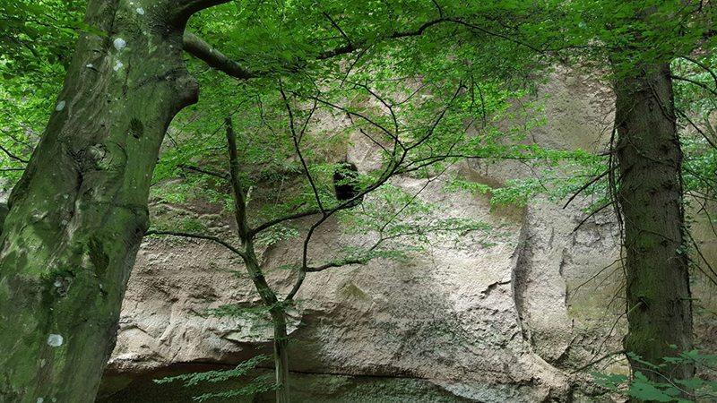 Hier steht ein Foto mit dem Titel: Fast senkrecht hat sich der Tönissteiner Bach in den weichen Trassboden eingegraben und so die Wolfsschlucht entstehen lassen (Foto: Hans-Joachim Schneider)