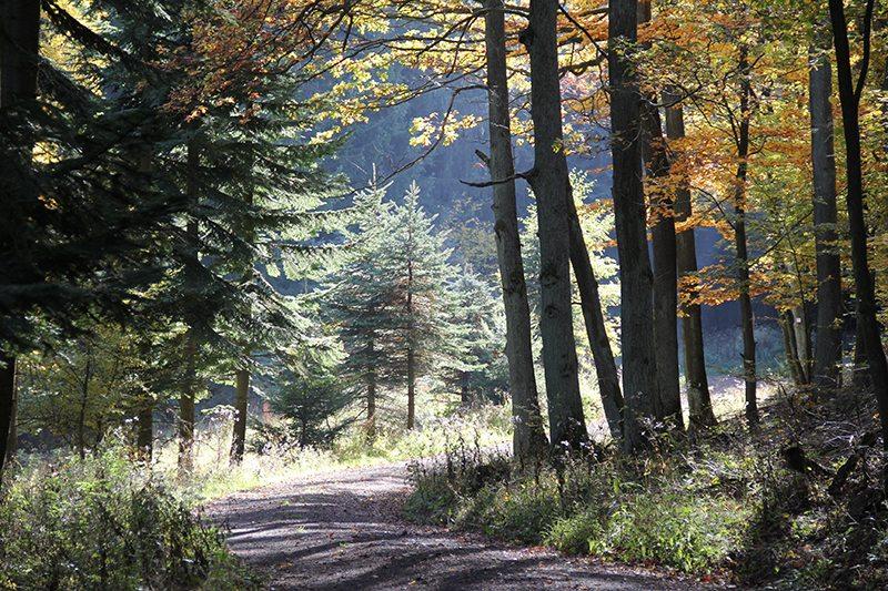 Hier steht ein Bild mit dem Titel: Andere Jahreszeit, anderes Licht, Novemberstimmung am Steinerberg (Foto: Norbert Schneider)