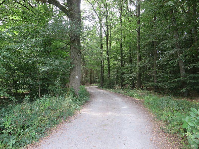 Hier steht ein Bild mit dem Titel: Und schwups, bin ich schon wieder drin im Wald (Foto: Hans-Joachim Schneider)