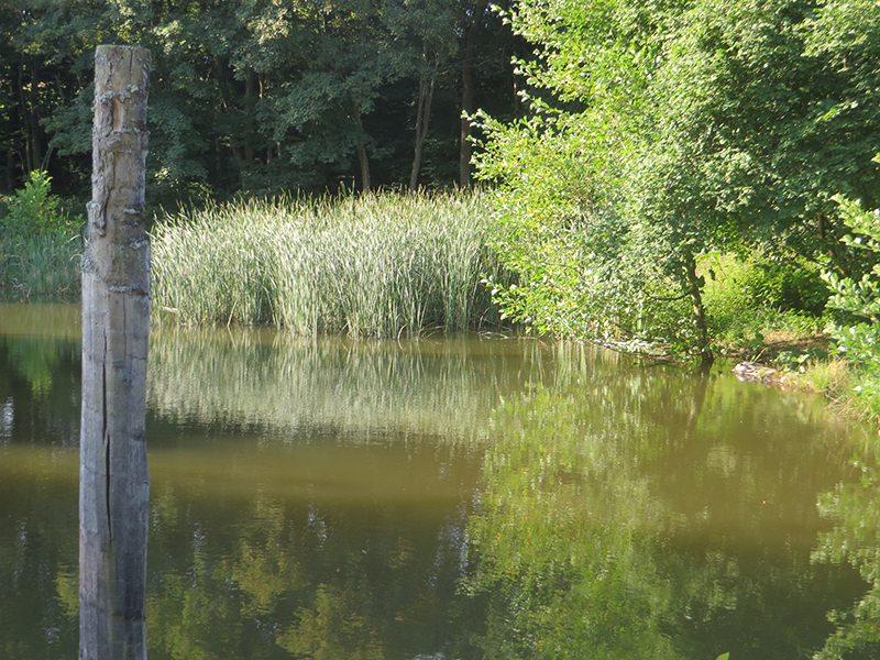Hier steht ein Foto mit dem Titel: Der »falsche« Wegweiser steht am Rand des Feuchtgebietes (Foto: Hans-Joachim Schneider)