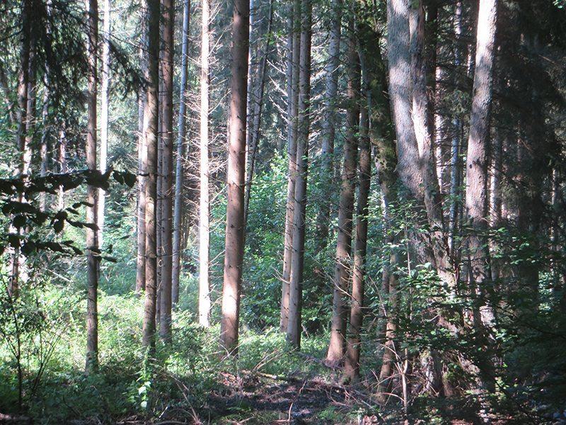 Hier steht ein Bild mit dem Titel: Einen ganzen Tag im Wald – eine Wohltat für alle Sinne und die Nerven (Foto: Hans-Joachim Schneider)