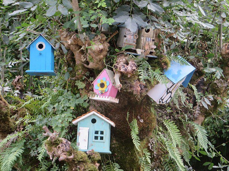 Hier steht ein Bild mit dem Titel: Bunte Vielfalt: der Vogelhäuschenbaum beim Hotel Weißmühle (Foto: Hans-Joachim Schneider)
