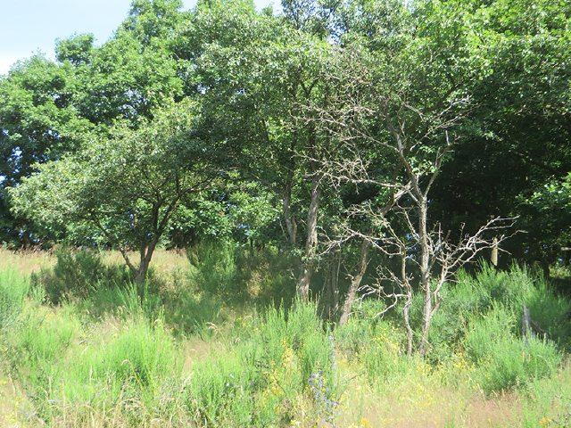 Hier steht ein Bild mit dem Titel: Die Wiesen auf der Hochfläche der Krähardt sind locker durchsetzt mit Bäumen und Gebüsch (Foto: Hans-Joachim Schneider)