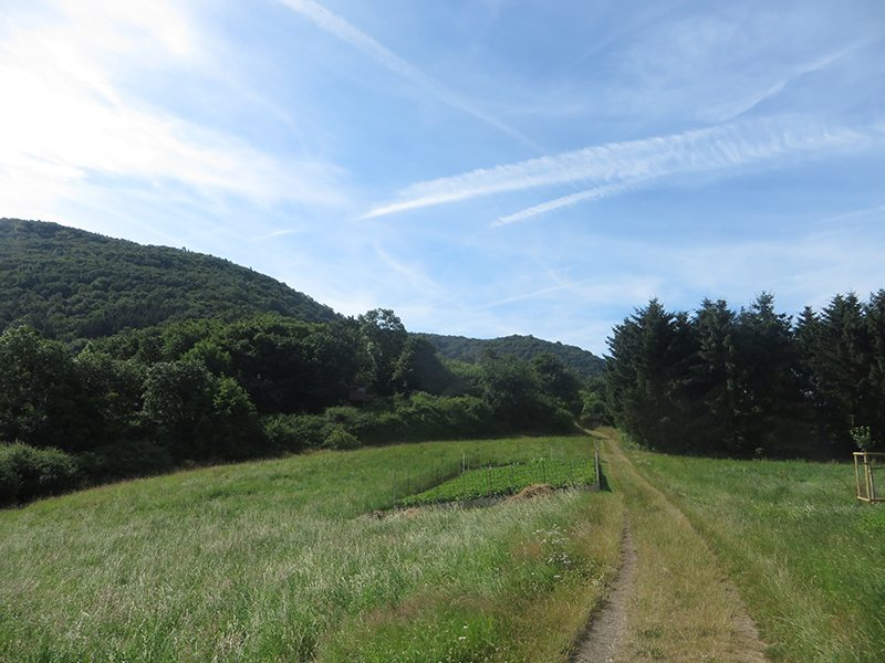 Hier steht ein Foto mit dem Text: Wald, Wiesen, Wege am Lingenberg – Teil der neuen AhrSteig-Etappe 5 (Foto: Hans-Joachim Schneider)