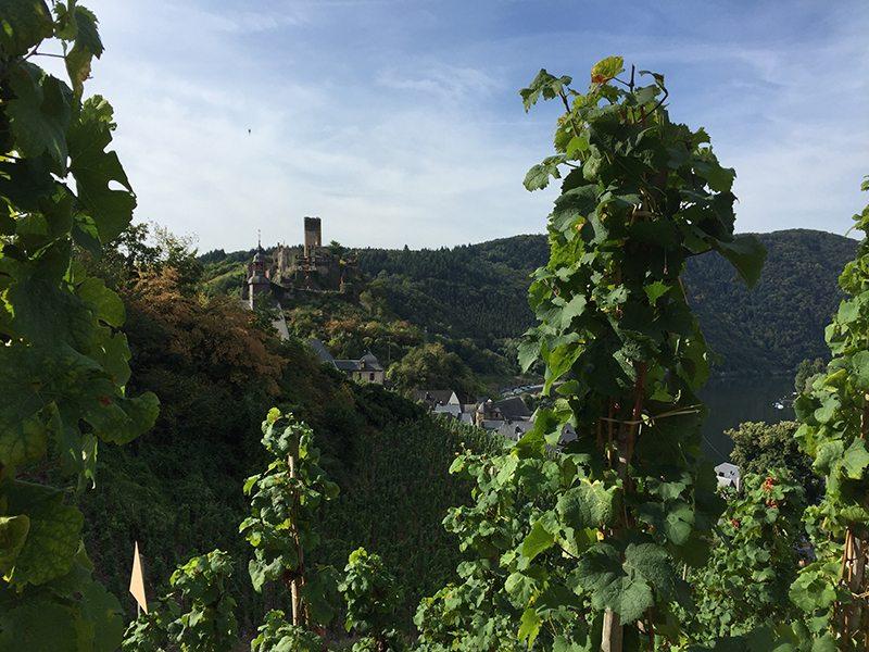 Weinranken, Mosel, Beilstein, Burg Beilstein,