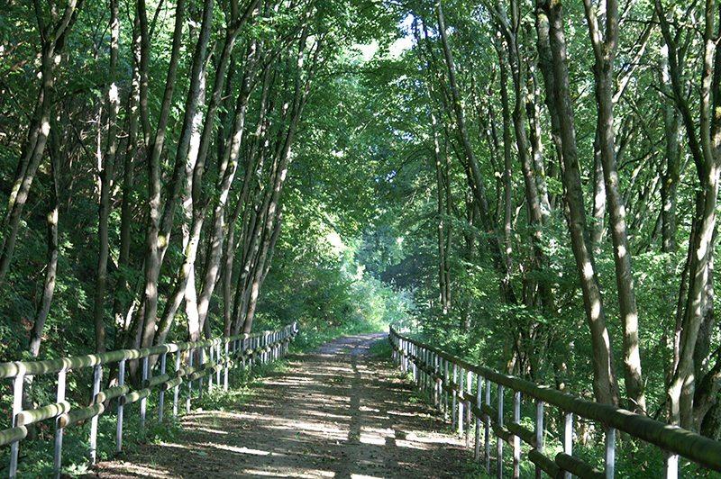 Hier steht ein Bild mit dem Titel: Fast so schön wie der Ahrsteig – wandern auf dem Ahrtalweg (Foto: Hans-Joachim Schneider)