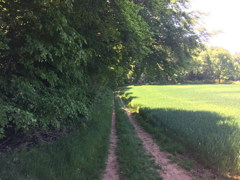 Gleich darauf verläuft der Römerpfad zwar auch wieder am Waldrand, aber im Schatten des Waldes.