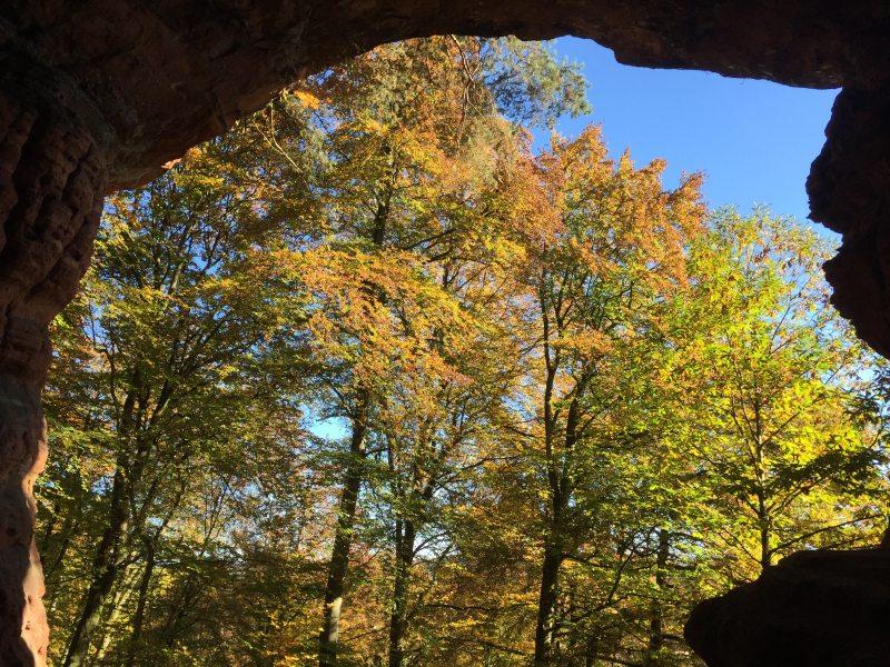 Blick aus der Genovevahöhle nach draußen, wo hochstämmiger Buchenwald vorherrscht.