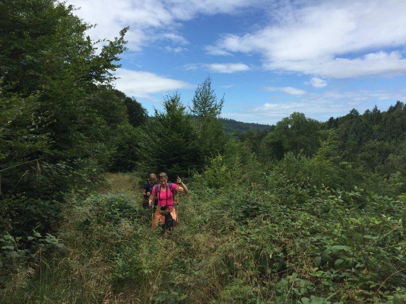 Wald, Weg, Gebüsch, Hecken, Sträucher, zugewachsen.