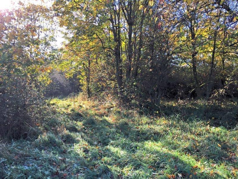 Ich habe den Wald ganz für mich alleine auf dieser Etappe (Foto: Hans-Joachim Schneider)