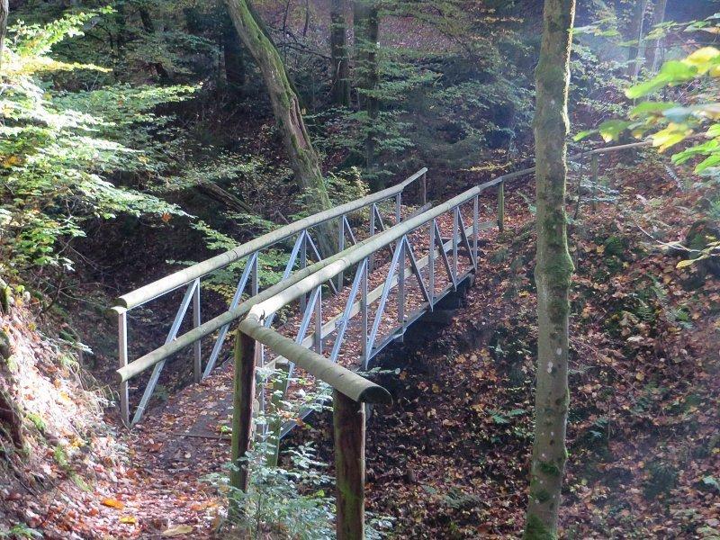 Wald, Bäume, Herbst, Steig, AhrSteig blau