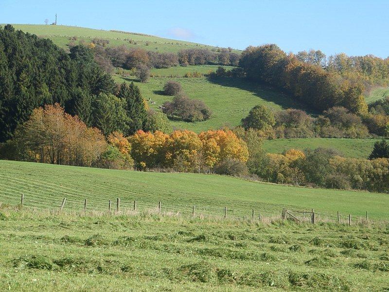 Wiese, Hecken, Landschaft, Himmel, blau, Bäume